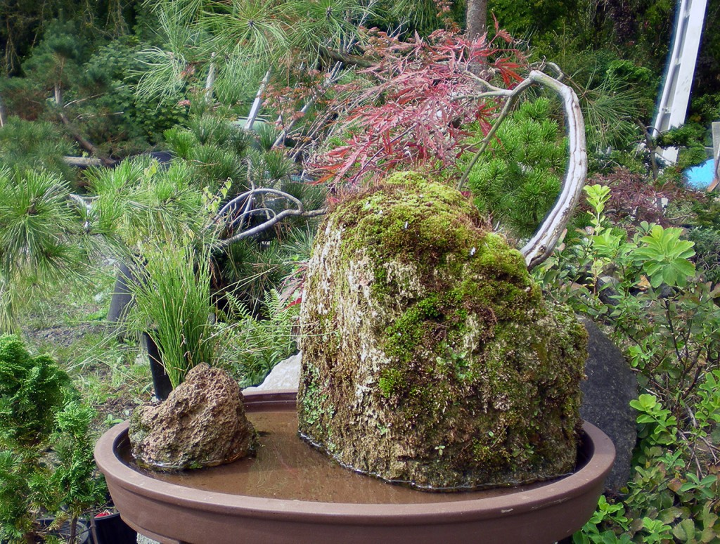 Native plants are used as well as the traditional bonsai material.