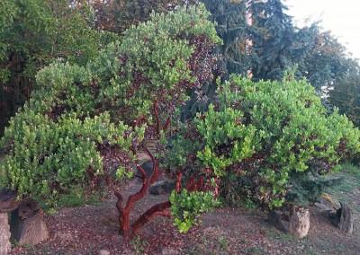 native_shrubs
